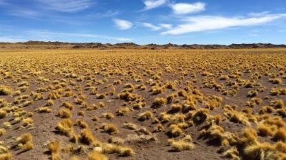 Désert d'Atacama #2