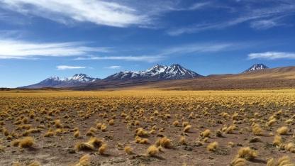 Désert d'Atacama #1