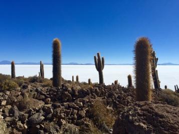 Jardin de cactus milénaires - Salar d'Uyuni